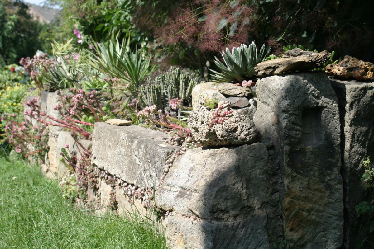 wall bepflanzen