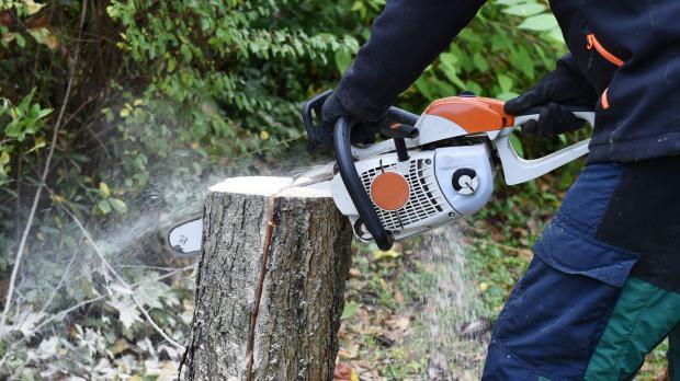 Baumfällen mit Bedacht