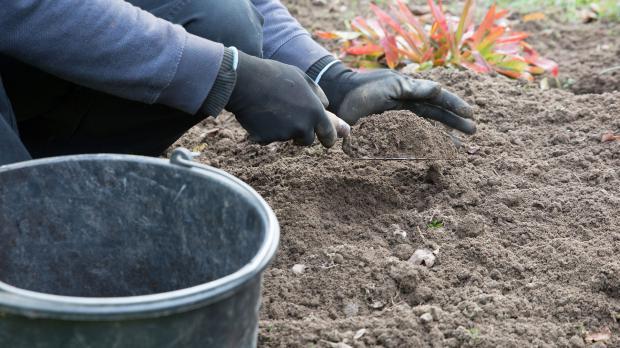 Bodenproben aus dem Garten nehmen