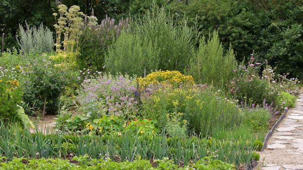 Gesunde Vielfalt: der Kräutergarten