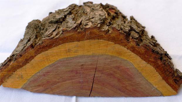 Kernholz vs. Splintholz