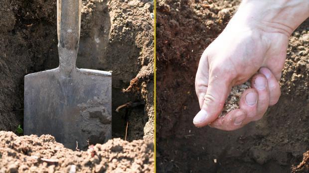 Loch graben und Zugabe Hornspäne