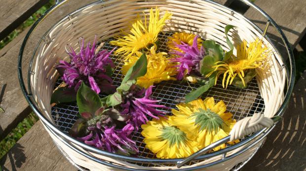 Ernte von Blütenkräutern