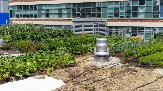 Gründach mit Gemüse in urbanem Umfeld