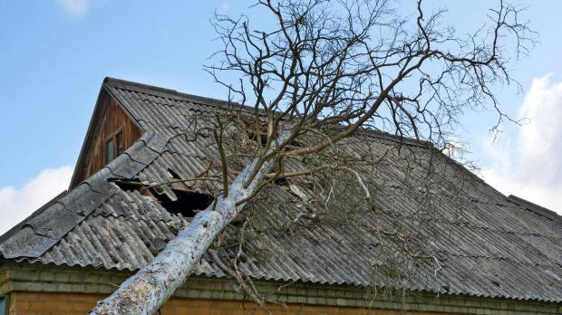 Baum liegt auf Dach