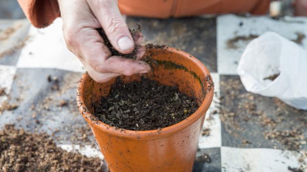 Zweite Schicht Substrat über Samen streuen