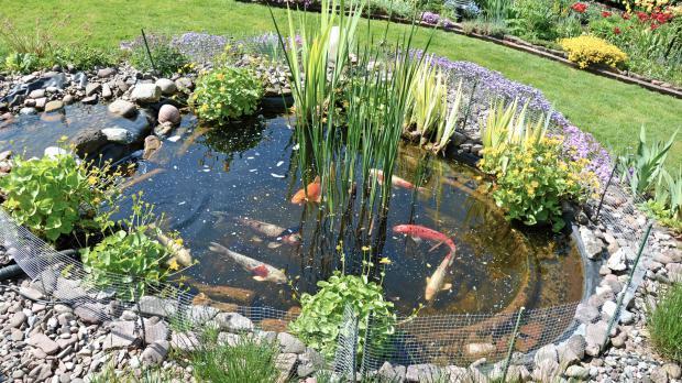 Zu große Fische im kleinen Teich