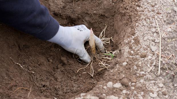 Große Knollen in den Bodenbereich legen