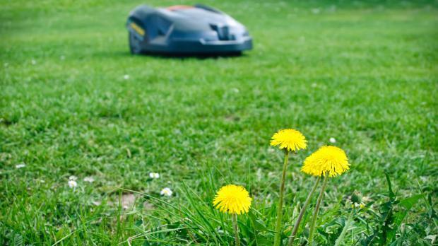 Rasenroboter an eigenen Garten anpassen