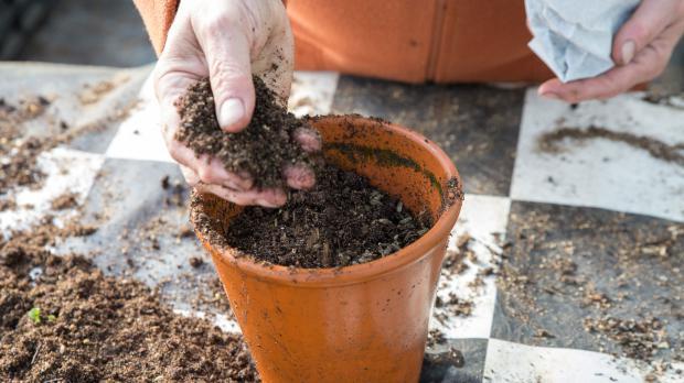 Dritte Schicht Substrat im Pflanztopf verteilen