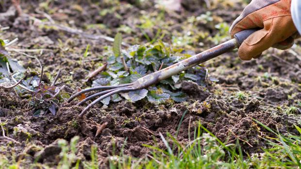 Boden lockern und Dünger einarbeiten