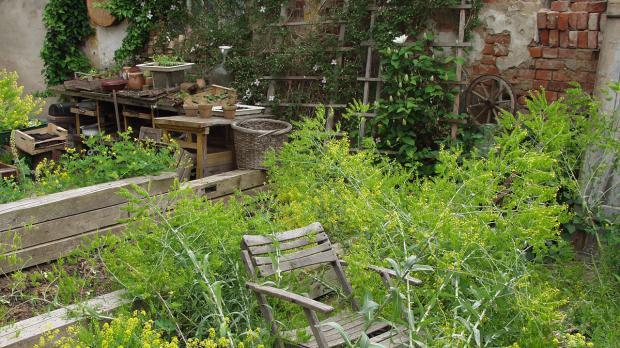 Wilder Naturgarten mit Holzmobiliar