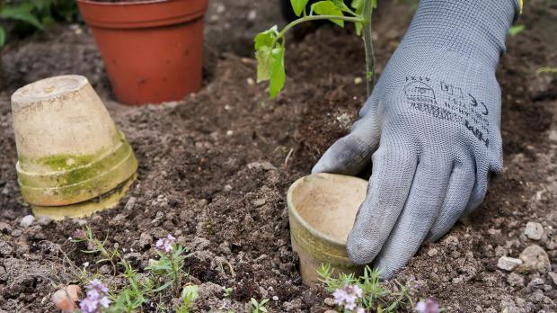Klettergerüst Tomate : Der nutzgarten im mai tipps und tricks vom gärtner @ diybook.de
