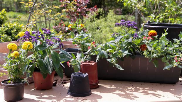 Nach den Eisheiligen Blumenkästen bepflanzen
