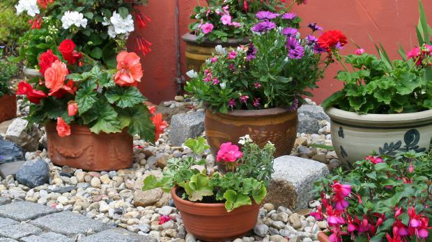 Kübelpflanzen umtopfen und auslagern