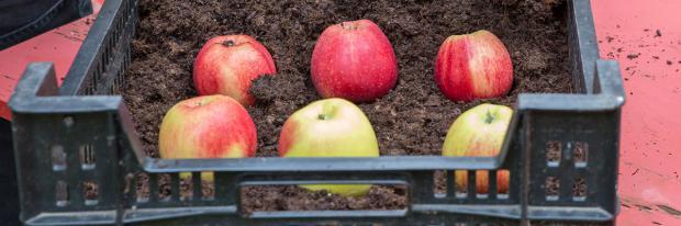 Kistenlager für Äpfel