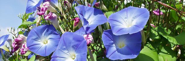 Blühender Garten im Mai