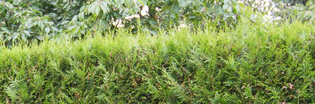 10 optimale Heckenpflanzen für den Garten - Garten @ diybook.de