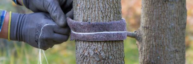 Selbstgemachten Verbissschutz auf Baum binden