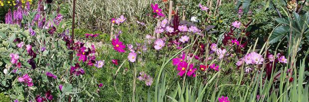 Aussaat von Sommerblumen
