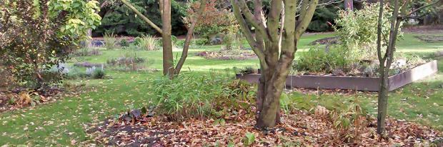 Herbstlicher Garten mit Laub
