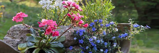 Mini-Steingarten in einer kaputten Tonschale