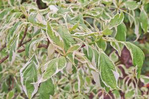 Die 10 attraktivsten Blattschmuckpflanzen