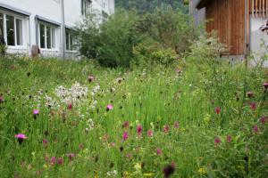 Natürlicher Insektenmagnet: Bunte Blumenwiese selber anlegen