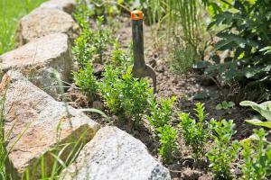 Buchsbaumhecke selber pflanzen