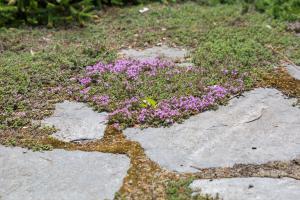 Es geht auch schöner: Fugenbepflanzung alter Trittsteine