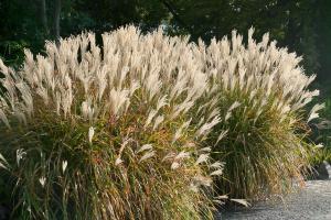 Die 10 imposantesten Gräser im Garten