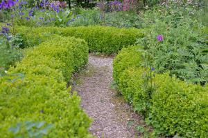 10 optimale Heckenpflanzen für den Garten