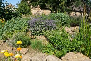 Der Kräutergarten – Aromatherapie im heimischen Grün