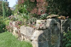 Die 10 schönsten Pflanzen für Trockenmauer und Co.