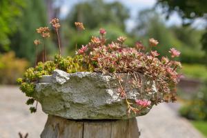 Klein, aber fein: Die 7 besten Pflanzen für Tröge und Mini-Steingärten