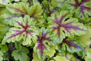 Die 10 schönsten Schattenpflanzen