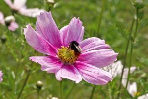 Die 10 beliebtesten Sommerblumen im Garten
