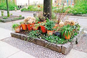 Urban Gardening – Stadtmensch trifft Natur