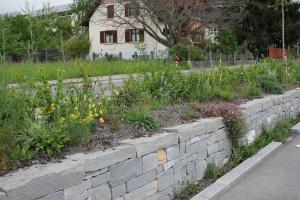 Selbstversorger im Garten: Buntes Wildstaudenbeet anlegen