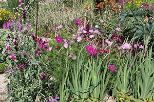 Aussaat von Sommerblumen - Tipps & Tricks beim Samen pflanzen
