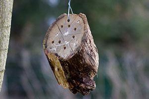Insektenhotel aus einer Baumscheibe selber bauen
