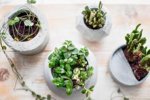 Blumentöpfe selber machen: Mit einfachen Mitteln Blumenbehälter herstellen