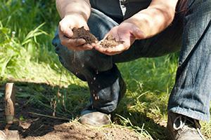 Gartenboden und Blumenerde - Wissenswertes über Erde