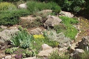 der steingarten - solide gartengestaltung. tipps & tricks vom, Garten und Bauten