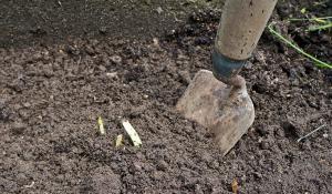 blumenzwiebeln pflanzen ausgraben vermehren und umpflanzen anleitung tipps vom g rtner. Black Bedroom Furniture Sets. Home Design Ideas