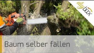 Embedded thumbnail for Baum fällen - Das Fällen einer Weide in Eigenregie